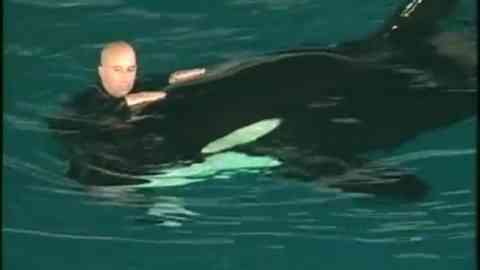 Seaworld Orcas In Abu Dhabi? New Theme Park To Open Without Killer